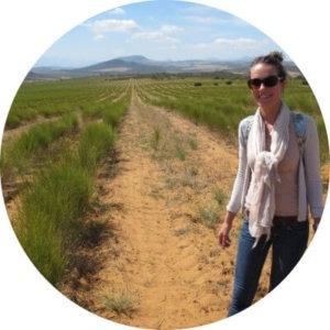 Mevrouw Cha op rooibos kruiden thee plantage in Cedargebergte, Zuid-Afrika.